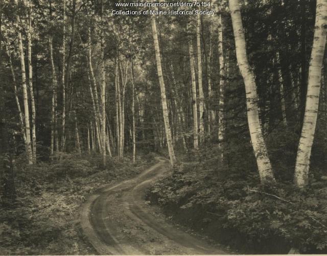 Road in birch forest, ca. 1935