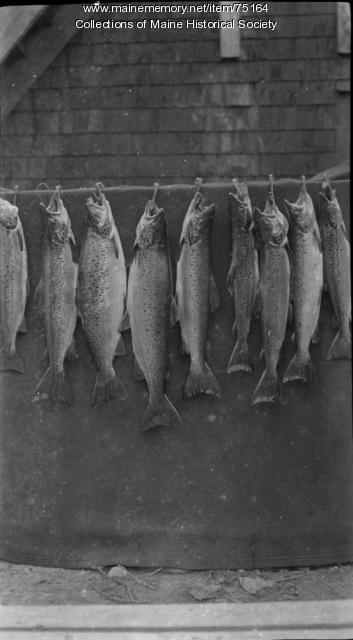 Fish on display, ca. 1930