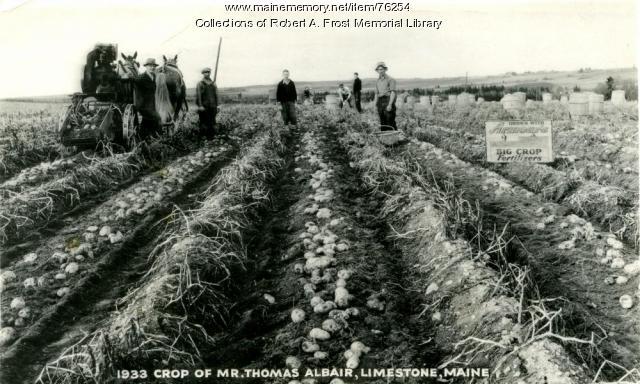 Albair Farm, Limestone, ca. 1933