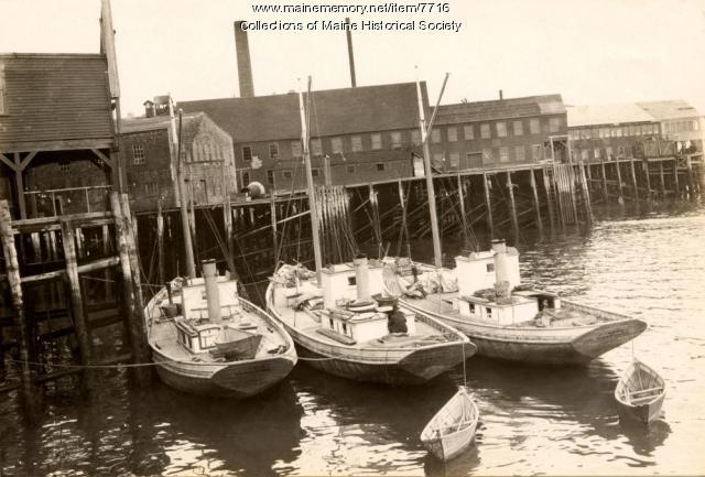 Modern sardine carriers