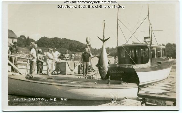 Tuna catch, South Bristol, ca.1950