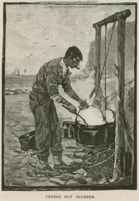 Trying out blubber, 1880