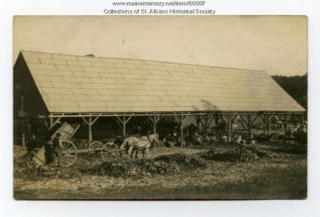 Corn Husking Time, St. Albans, ca. 1920