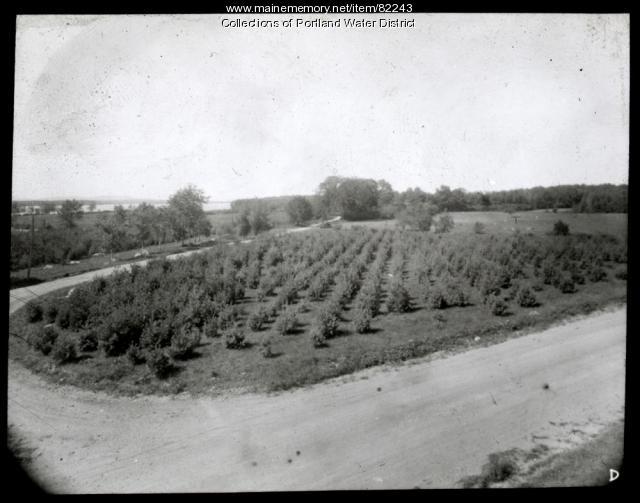 Portland Water District Hanscomb Lot, Standish, 1919