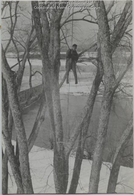 Civilian Conservation Corps tree climber, Bridgton, 1935