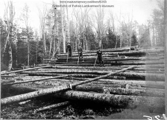 Logging in the Maine woods
