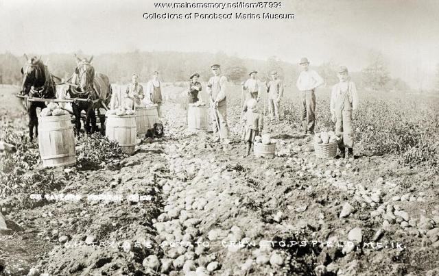 O. H. Taylor's potato crew, Topsfield, ca. 1905