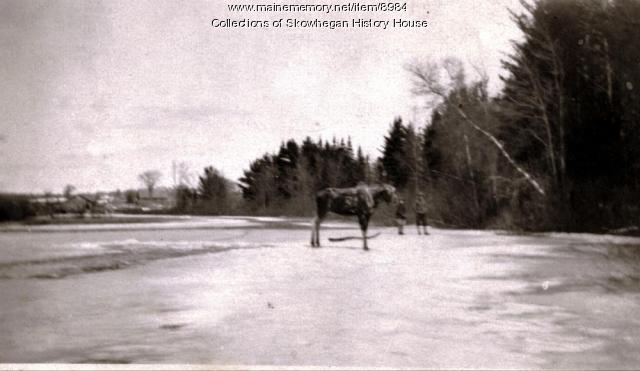 Moose on ice, Skowhegan, ca. 1920