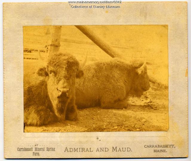 Admiral and Maud, Carrabassett, ca. 1905