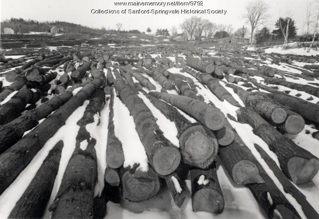 B. C. Jordan Lumber Co., Alfred, 1919